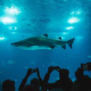 group of people taking picture of shark